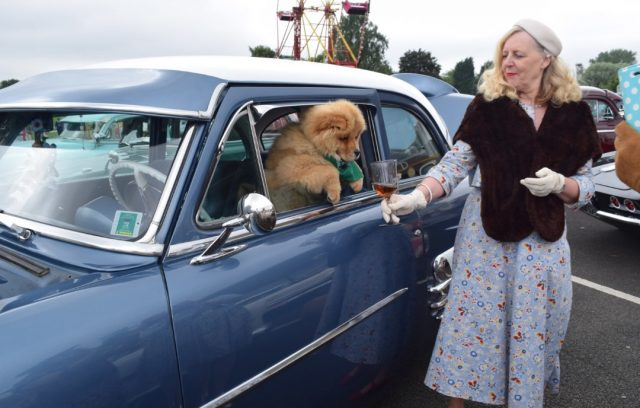 chow chow, leicester vintage carnival, hell bunny dress, plus size blogger, vintage blogger, theodore, vintage style, vintage events, custom cars, classic car show,